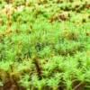 コケリウム、室内での栽培が簡単なコケ